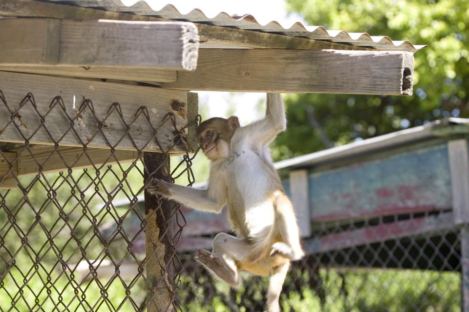 Cages keep the monkeys out and the humans in