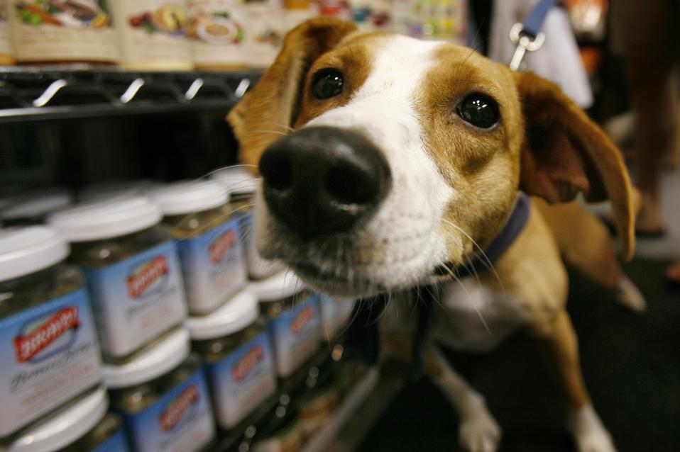 Pet care and organic Pet Food